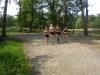 Girls in morning workout at Garret !