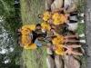 Golden Shirt recpients